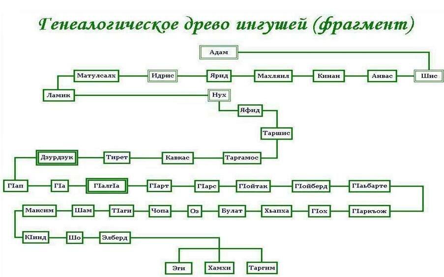 семейное древо зоя архипова