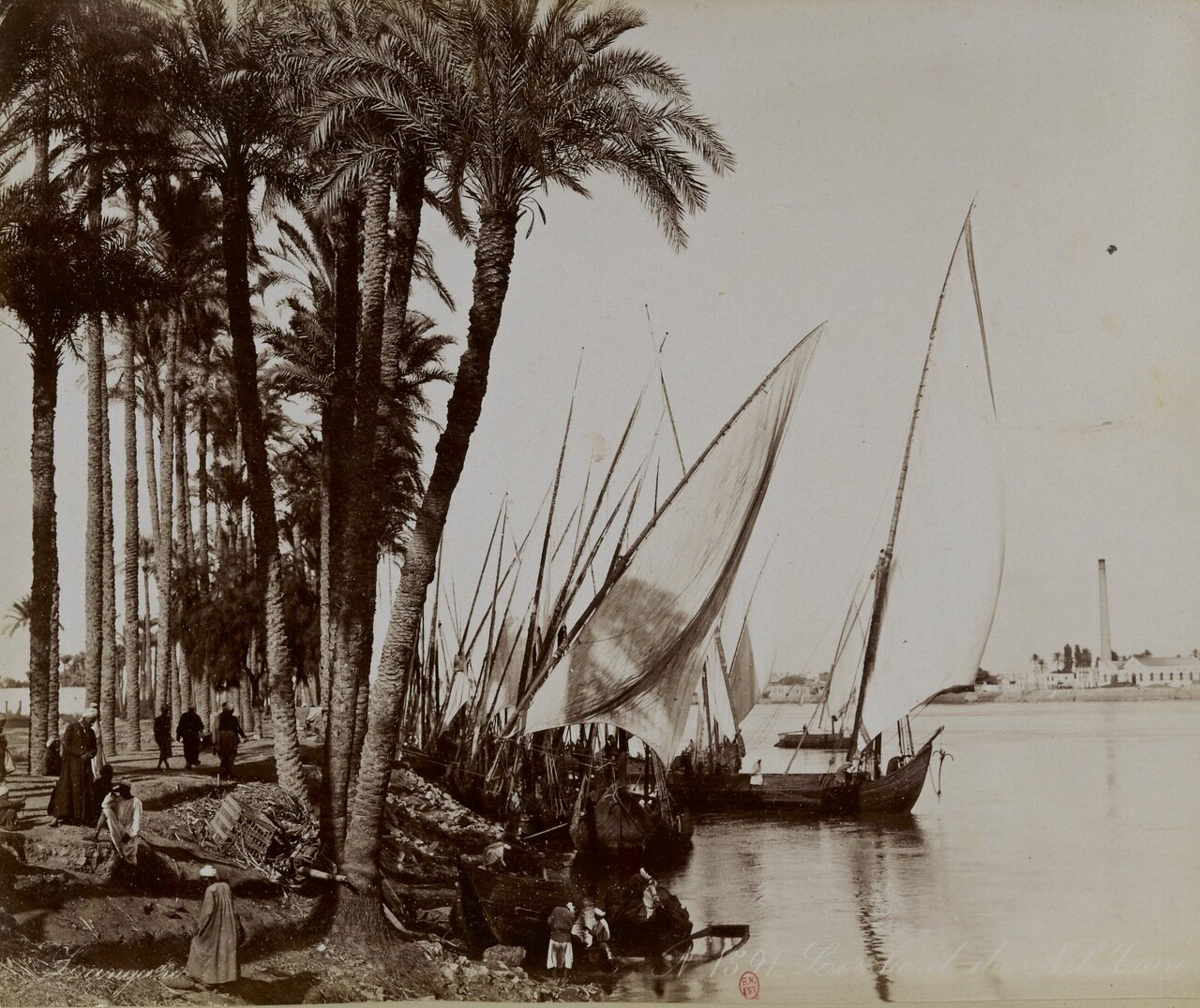 Берег Нила недалеко от Каира