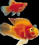 рыба (7).png