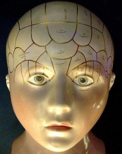 A Phrenology Head