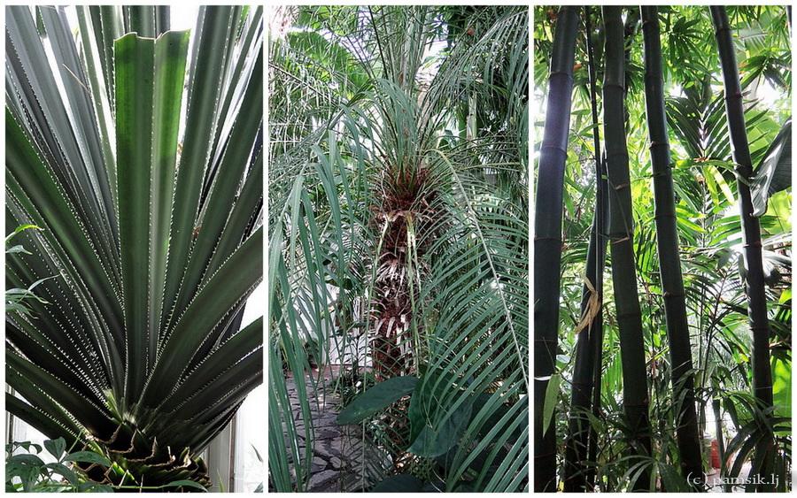 пальмы.jpg