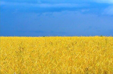 С Днем национального Флага Украины