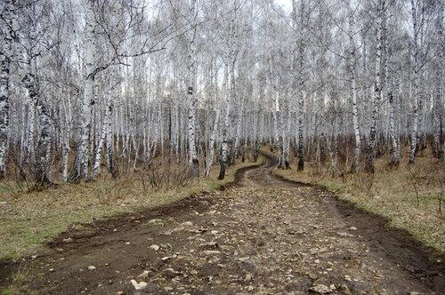Дорога изяшмы