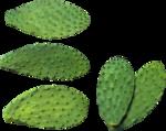 cactus (5).png