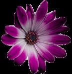 feli_ss_pink-white flower.png