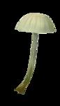 ldavi-paintersfaeries-mushroom3.png