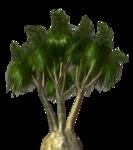 Palms  (7).png