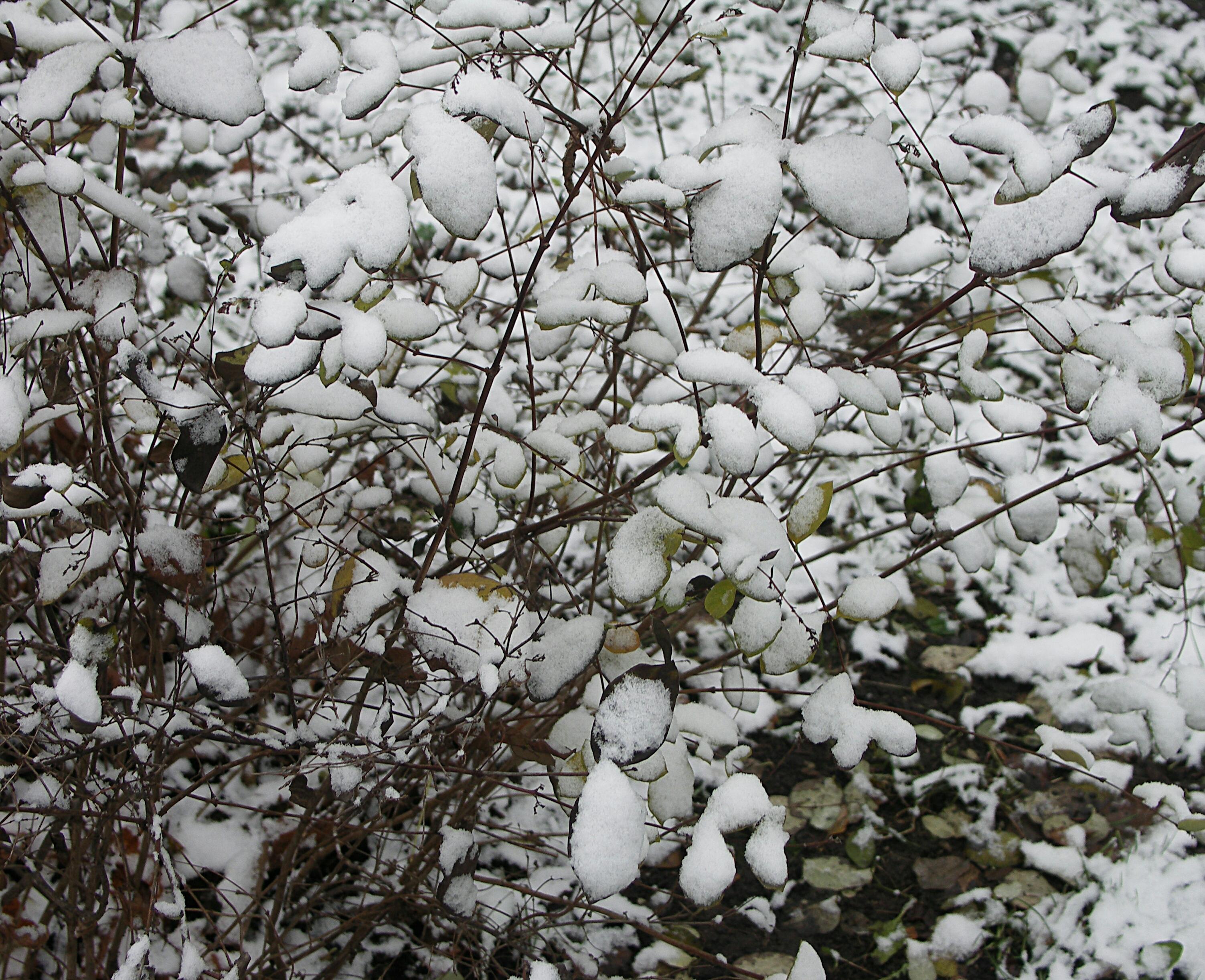 Снежные листочки