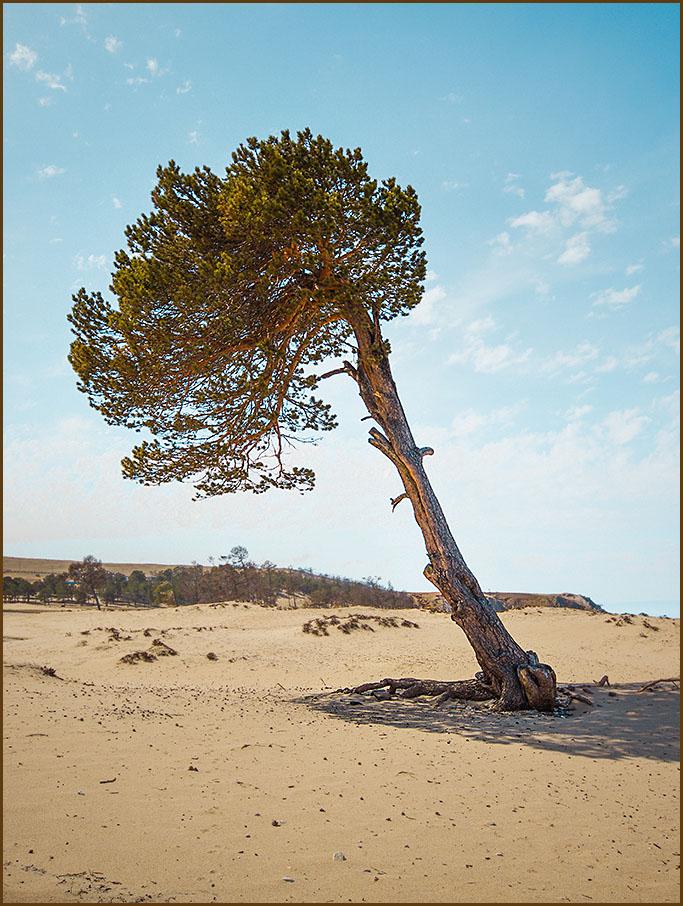 Вот так дерево