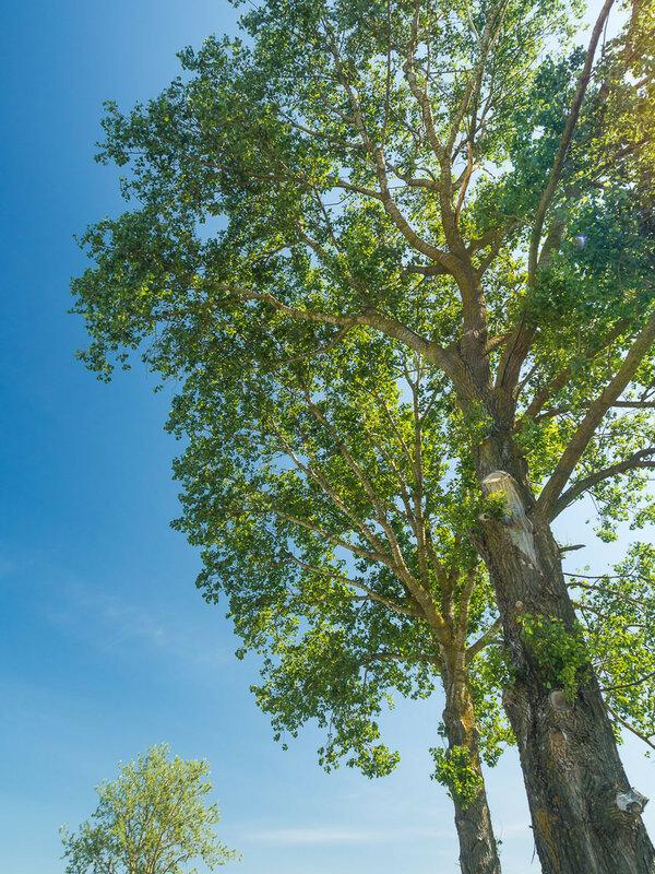 Одиночные деревья живописны.