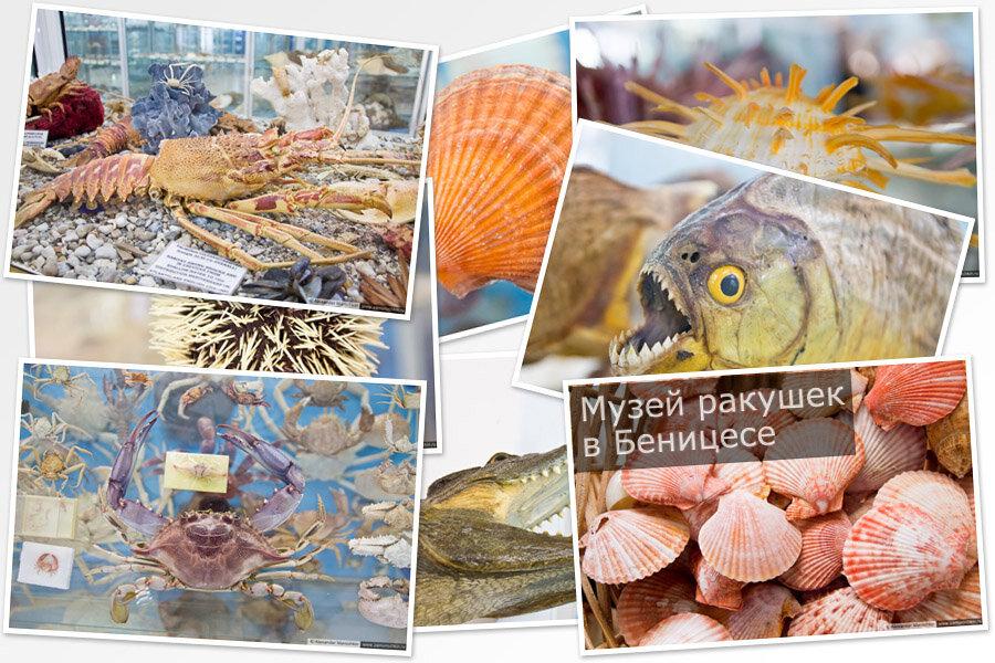 Музей ракушек Корфу | Corfu Shell Museum