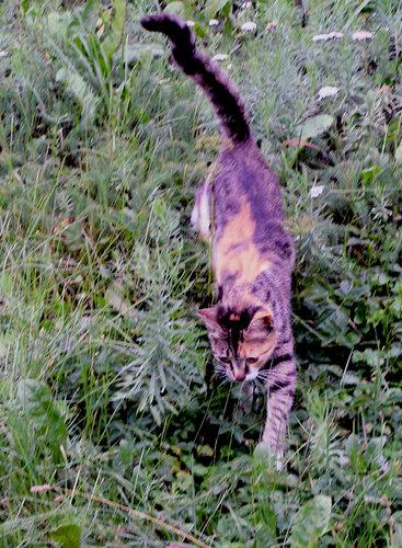 Идущая по траве