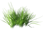 Bush and Grass  (110).png