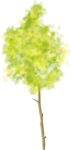 tree (33).png