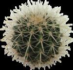 cactus (3).png