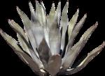 cactus (6).png