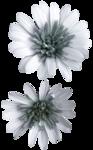 feli_ss_blue flowers.png