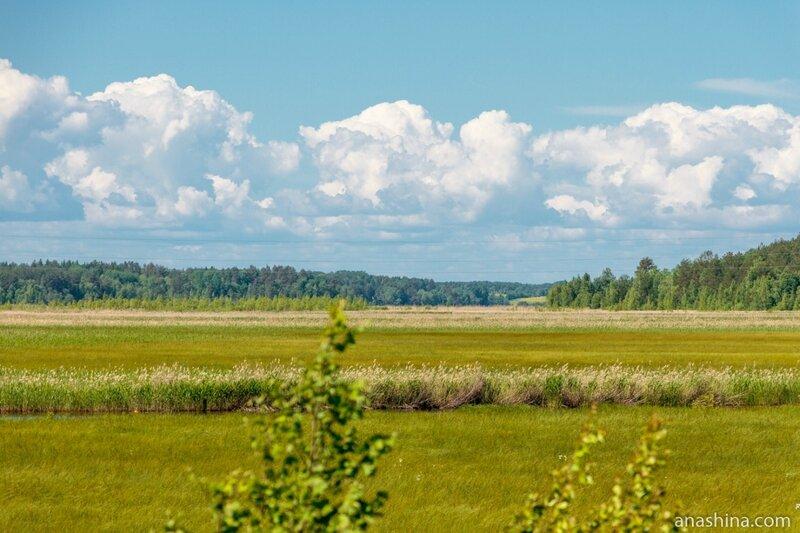 Поле и лес, Вологодская область