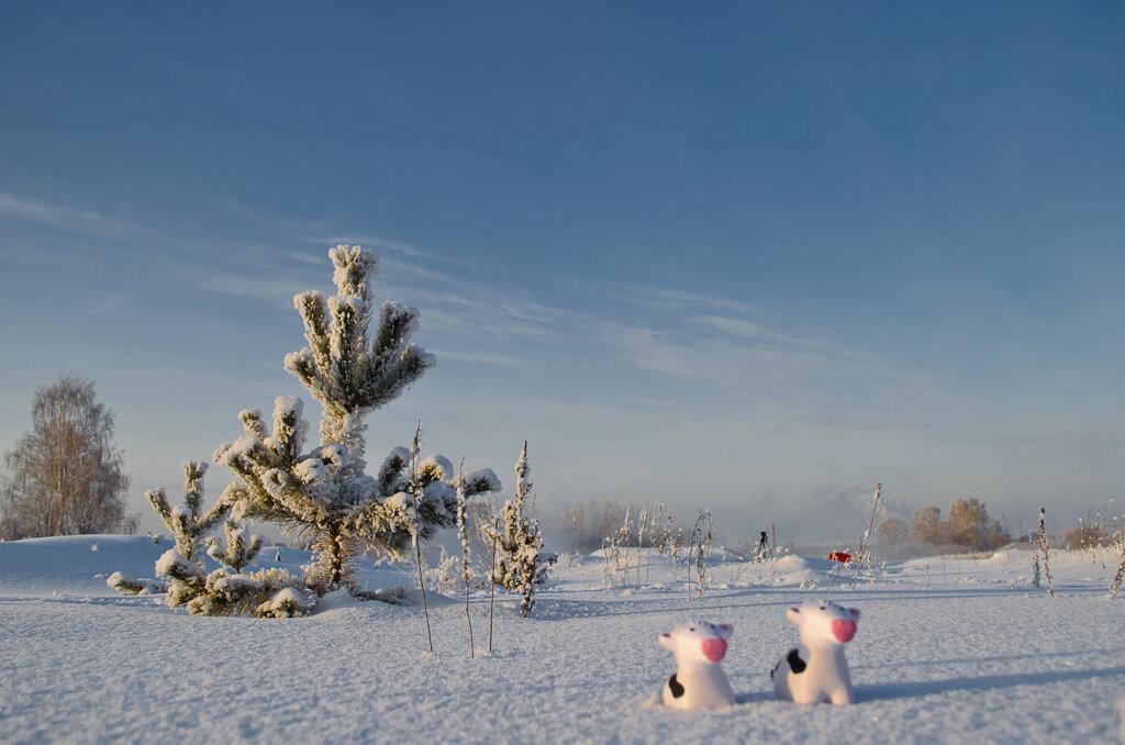 Пример фото с Nikon D5100 KIT 18-55 VR. Снежные коровы на Урале