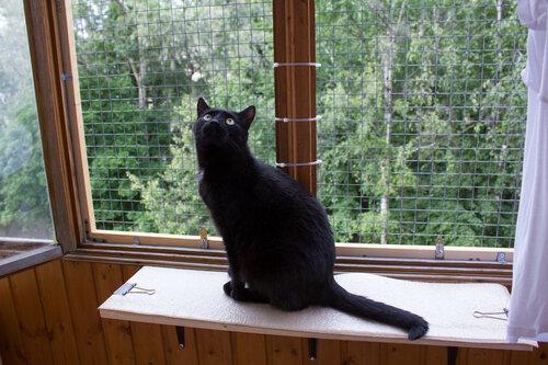 Сетка для котов на балкон