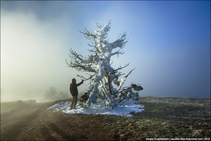 Сумасшедшая елка