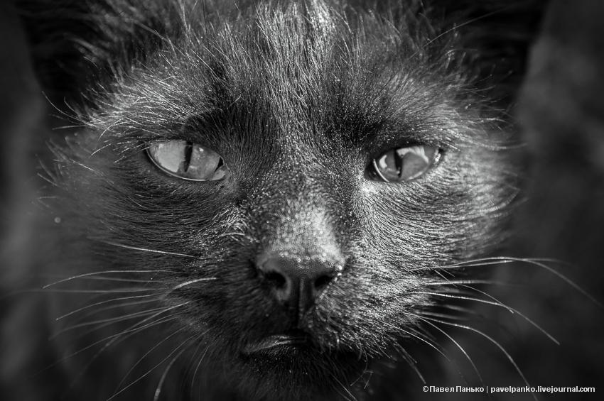 кот котэ кошка животное панько pavelpanko.livejournal.com