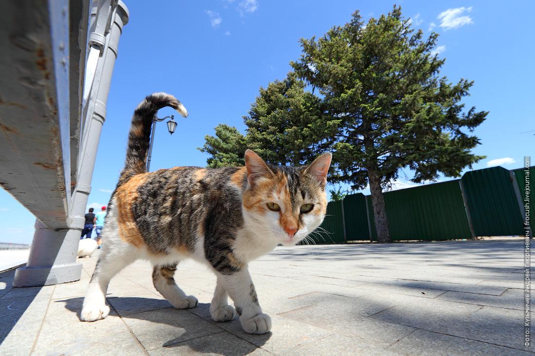 котик на набережной Астрахани