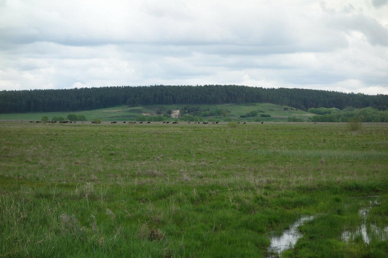 заливные луга / болото