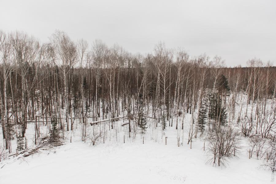 саровская протяжка зимой