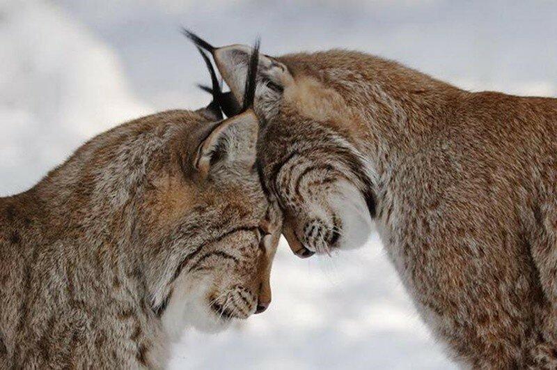 Фотографии. Животный мир