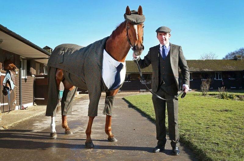 Костюм-тройка для коня