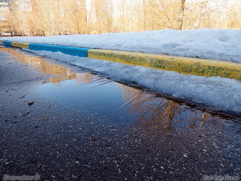 Кристаллы льда на луже