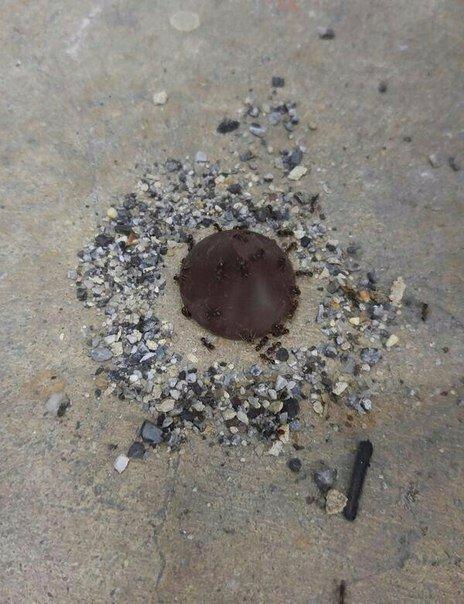 религия муравьев