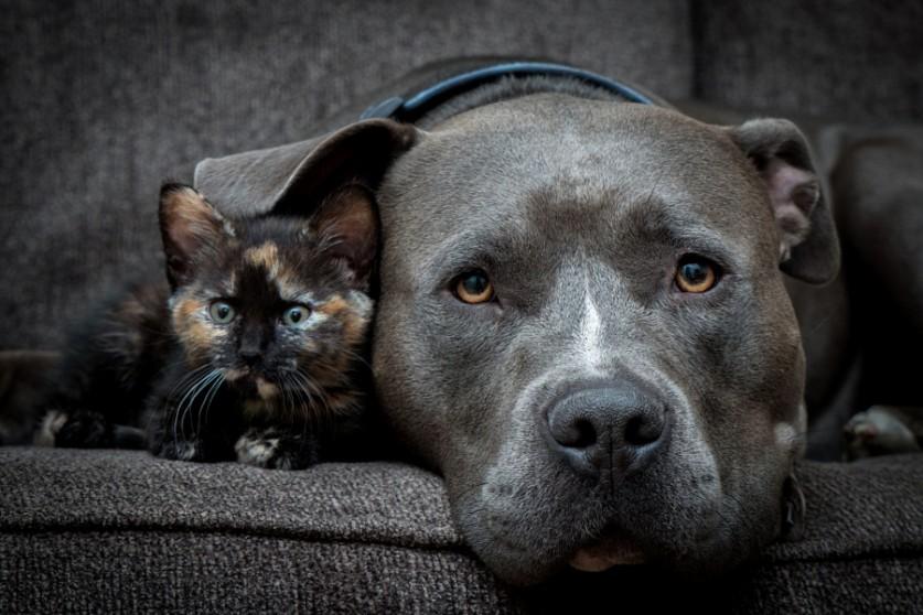 Большие и маленькие животные вместе;) Удивительно тёплые фотографии (18 фото)