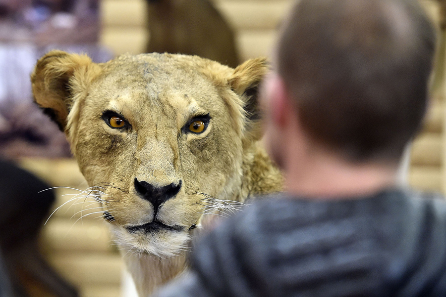 Taxidermy on display at a hunting fair in Dortmund, Germany, on February 12, 2016.