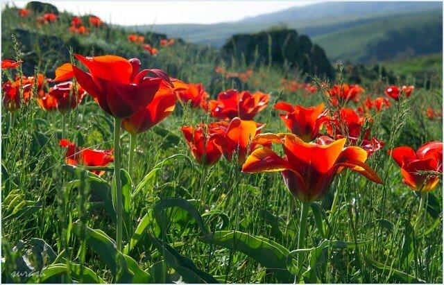 весна в Казахстане