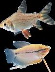 рыба (18).png