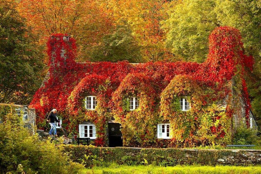 Осень волшебница в листья яркие