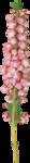 NLD Flower 4.png