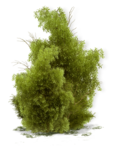 tree (32).png