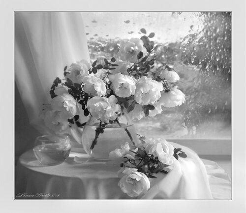 Розы и непогода открытка поздравление картинка