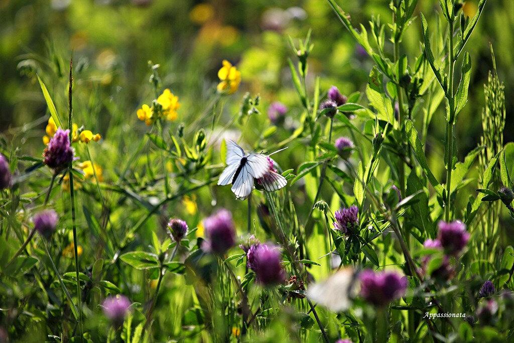 Жизнь бабочек