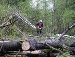 Надо помочь лесу сделать лыжный маршрут