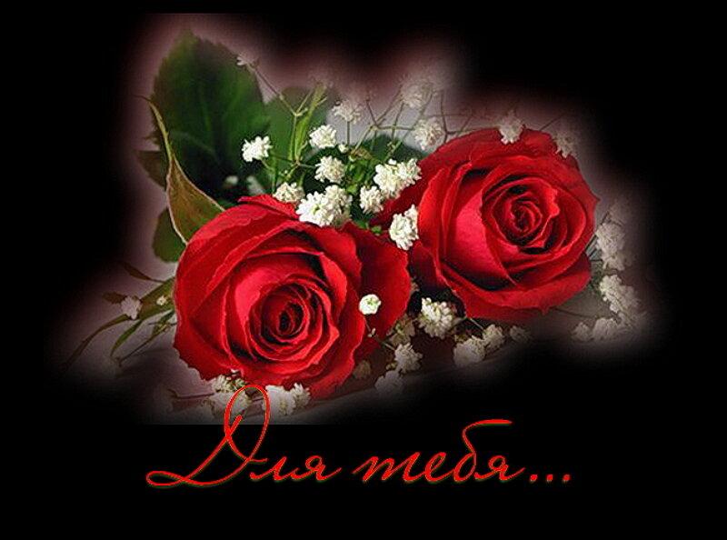 С днем рождения дарю розу