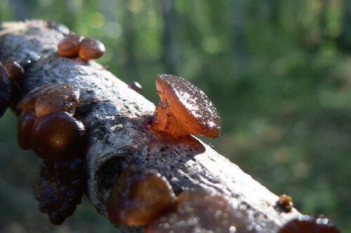 грибы желе2
