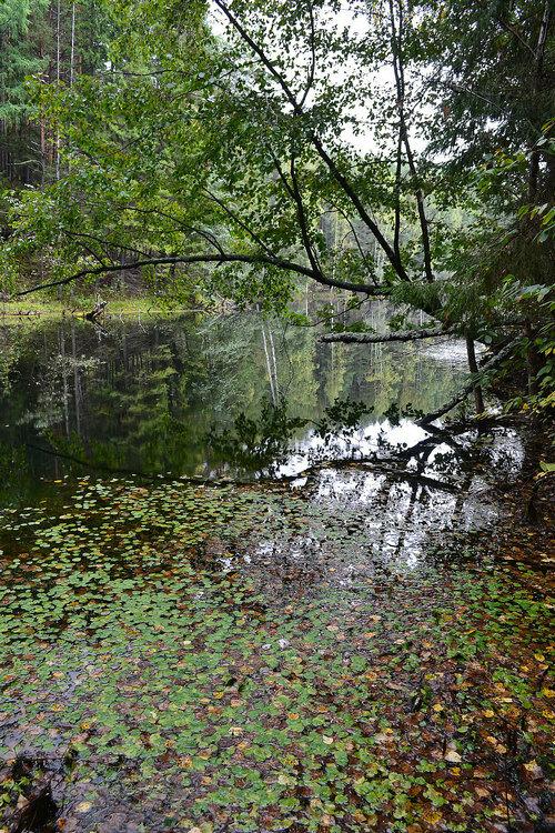 Лесное озеро около деревни Нелоба Верхнесалдинского района Свердловской области