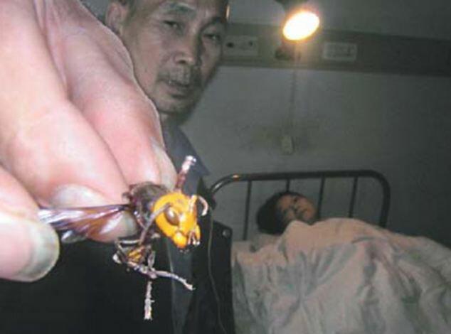 Полчища шершней атакуют китайцев число погибших возросло до 41 человека