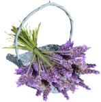RR_LavenderFields_Element (13).png