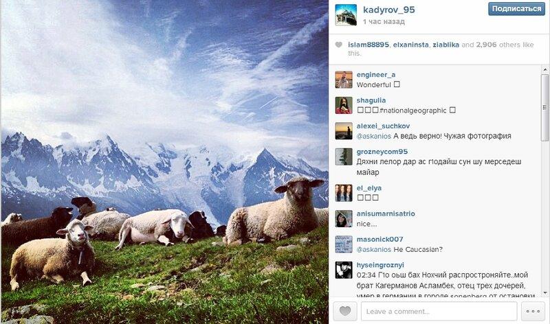 Как Кадыров овец украл