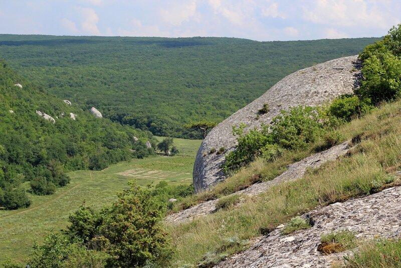 Сосна на вертикальной скале в Эски-Кермен